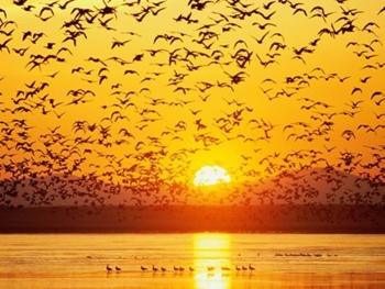 Bir gün güneş doğacak-Sizden Gelenler-Fehmi Özer