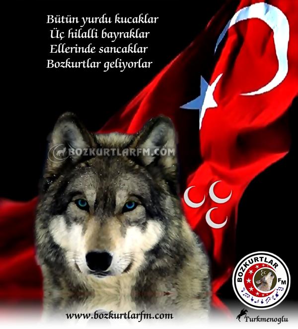 bozkurt_turk_bayragi_1